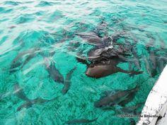 Caye Caulker, relax i taurons a Belize