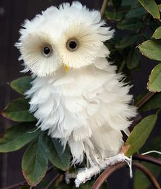 White owl Crazy little critter! Animals And Pets, Baby Animals, Funny Animals, Cute Animals, Baby Owls, Funny Birds, Funny Owls, Scary Funny, Creepy