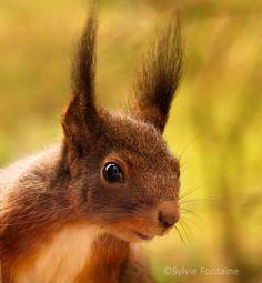 elles sont jolies mes oreilles avec leur coiffe d'hiver! non?