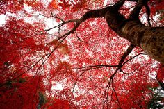 Kyoto is a city located in the central part of the island of Honshu, Japan.  It is beautiful.