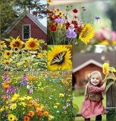 #country flowers