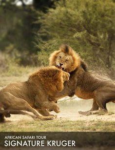 African Safari Tour 2015: Signature Kruger