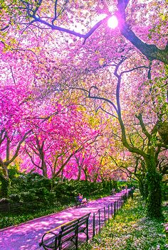 The Conservatory Garden in Central Park ~ NYC, New York – USA. Central Park is good for the soul. The contrast between urban life and pure nature is amazing. When your walking in Central Park you do not hear a sound from the traffic etc. Places Around The World, Around The Worlds, Beautiful World, Beautiful Places, Wonderful Places, Trees Beautiful, Beautiful Park, Amazing Places, Conservatory Garden