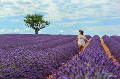 Provence by Francesco Vaninetti on 500px  #Lavenderfield