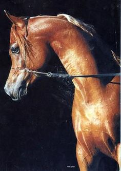 Blog de chevaux-arabes - Le pUr-SanG aRaBe... - Skyrock.com