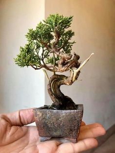 A Customer's Guide To Herbal Dietary Supplements On The Net Stunning Bonsai Plant Design Ideas For Garden 52 Buy Bonsai Tree, Flowering Bonsai Tree, Bonsai Tree Care, Indoor Bonsai Tree, Bonsai Plants, Bonsai Garden, Bonsai Fruit Tree, Mame Bonsai, Ikebana