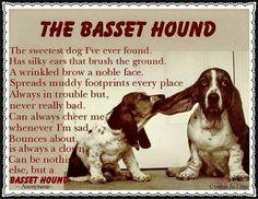 Bassett Hound poem