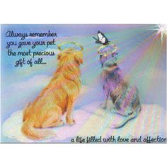 No matter how short or long your pet was with you, remember it knew love in its life.