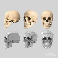 Exceptional Drawing The Human Figure Ideas. Staggering Drawing The Human Figure Ideas. Skull Anatomy, Head Anatomy, Human Anatomy Drawing, Anatomy Art, Anatomy Study, Human Figure Drawing, Figure Drawing Reference, Anatomy Reference, Drawing Heads