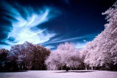 near-infrared-photo-27
