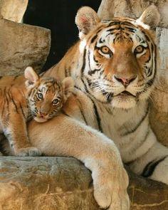 Mama and cub