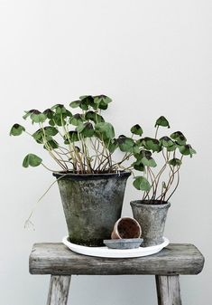 Lisää vihreitä kuvia + kirja lähtee - New Deko Sites Ikebana, Pot Jardin, Decoration Plante, Plants Are Friends, Interior Plants, Room Interior, Interior Design, Arte Floral, Plantation