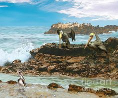 PELICAN POINT AT LAGUNA by Todd L Thomas. Original painting available direct from artist $1950, Paypal DreamscapeCreative@Gmail.com with painting title...Prints also available at www.ToddLThomas.net
