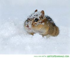 Animal playing in the snow -