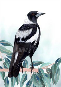 Magpie in Gum Tree art print by Australian artist Lamai Anne. Australian Birds, Australian Artists, Bird Pencil Drawing, Magpie Tattoo, Art Trading Cards, Pole Art, Fox Illustration, Guache, Watercolor Bird