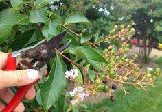 Rosenrückschnitt im Frühling und im Herbst - Rosen richtig schneiden