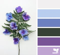 Flora Hues - www.design-seeds....