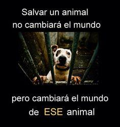 Salvar a un animal no cambiará el mundo, pero cambiará el mundo de ESE animal…