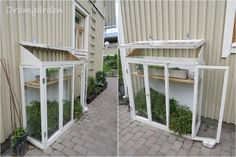 Simple tomato green house made by old windows!