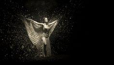 Phoenix by Zoltan Tot
