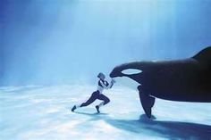 I so wanted to be a whale trainer when I was young!