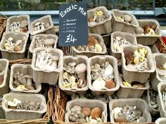 Marylebone Farmer's Market. Mushroom lovers rejoice!