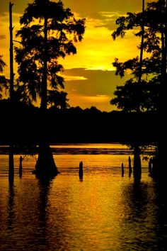 Sunset over Lake Bistineau, Louisiana- where my mom learned to water ski and my parents had their first boat together! Beautiful Sunset, Beautiful Places, Places To Travel, Places To Go, Louisiana Bayou, Cypress Trees, Florida, Mellow Yellow, Solo Travel