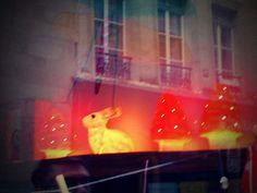 Paris - Le Marais - lapin aux champignons ! by Marie C. Cudraz, via Flickr