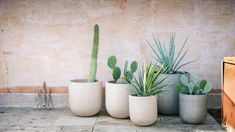Radius Indoor/Outdoor Planters Large Planters, Indoor Planters, Indoor Outdoor, Planter Pots, West Elm, Planter Liners, Container Plants, Plant Containers, Cactus Plants