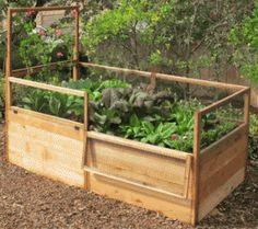 x Raised Garden Bed With Hinged Fencing and Trellis - Bepflanzung Raised Garden Bed Kits, Building A Raised Garden, Raised Beds, Organic Gardening Catalogue, Small Space Gardening, Cactus Y Suculentas, Growing Vegetables, Growing Tomatoes, Shade Garden