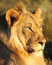 The definitive Kruger Park safari
