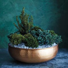 A Cluster of Conifers for a Festive Front Door Arrangement