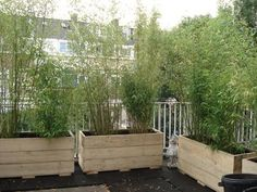 Photo: Idea for roof terrace. Posted by mamo on Wie. Porch And Terrace, Rooftop Terrace, Terrace Garden, Porch Swing, Patio, Bamboo Planter, Planter Boxes, Fargesia, Outdoor Furniture Sets
