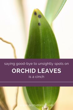 Got a Sick Orchid? How to Treat Orchid Pests and Disease - Orchid Bliss - This-totally-worked-the-black-spots-on-my-orchid-leaves-are-gone. Container Gardening Vegetables, Succulents In Containers, Container Plants, Container Flowers, Vegetable Gardening, Orchid Roots, Orchid Leaves, Orchid Plant Care, Orchid Plants