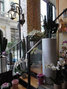 Fioreria Alloni, Galleria Matteotti 4 #Mestre #tuttaperme #fiori #fioreria #flowers