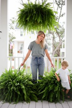 how to get big healthy ferns - Holy City Chic Hanging Ferns, Hanging Plants Outdoor, Hanging Planters, Fern Planters, Potted Ferns, Porch Plants, House Plants, Ferns Care, Plastic Hanging Baskets