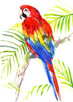 Scarlet Macaw, Original watercolor painting bright tropical bird art, 16 X 12 in, brigh red yellow bluw green