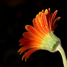 A Simple Flower 02 by *s-kmp