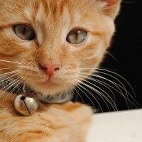 #dogalize Collari per gatti: come sceglierli e le caratteristiche #dogs #cats #pets