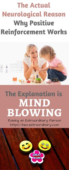 With an understanding of how the brain functions, it becomes clear why positive reinforcement works, and it's actually mind blowing. Our brain is an amazing, plastic organ – meaning it is easily shaped and molded.  Knowing how it's shaped can open up endless possibilities. The brain is shaped and changed through experiences, this is called …
