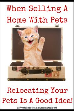 When Selling A Home With Pets, Relocating Your Pets Is A Good Idea - http://www.rochesterrealestateblog.com/how-to-sell-a-home-with-pets/ via @KyleHiscockRE #realestate #homeselling