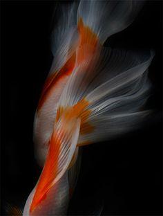 Still Life Fish by Hiroshi Iwasaki