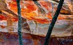 West Fork of Oak Creek Canyon in Arizona - Bing Wallpaper. Bing daily images are all in bing. Provides Bing daily wallpaper images gallery for several countries. Oak Creek Canyon, South By Southwest, Photo Wallpaper, Tandem, New Image, Places To Go, Fork, Gallery, Painting