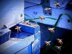 En plena faena las abejas