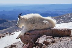Mt. Evans, Colorado - highest paved road in North America and very scenic.  One of my favorite drives in the mts.
