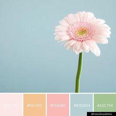 Flower | Minimalism | Pastels | Color Palette Inspiration. | Digital Art Palette And Brand Color Palette.
