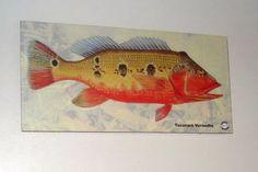 Placa Decorativa 28x14cm * Tucunaré Vermelho * Img Art - R$ 20,00 em Mercado…