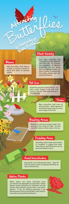 How to Attract Butterflies in Your Yard! #infographic #garden