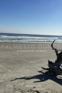 The top five reasons I would recommend Palmetto Dunes as the perfect South Carolina destination resort for families.