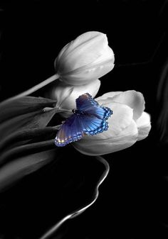 ~~ butterfly and flowers ~~